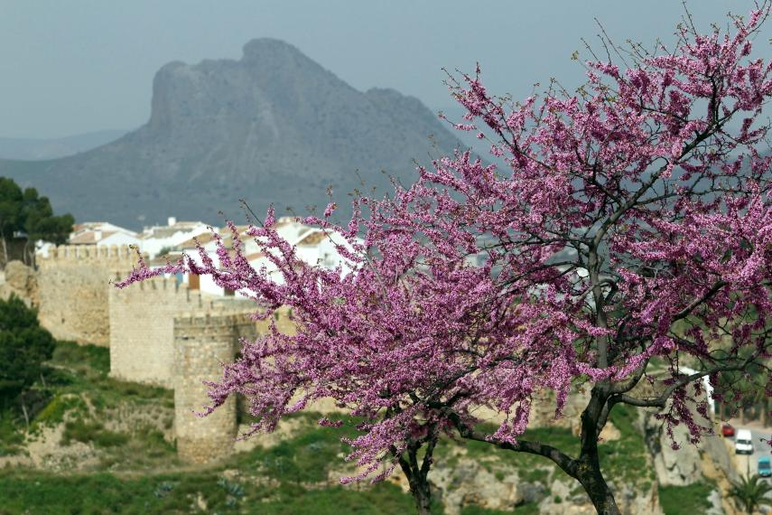 Spring in Malaga province-Antequera
