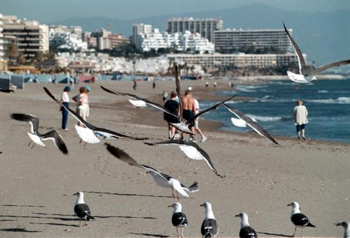 benalmadena beaches, playa de la salud sights